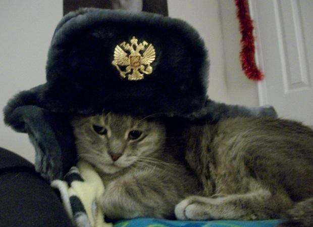 book cat russian hat